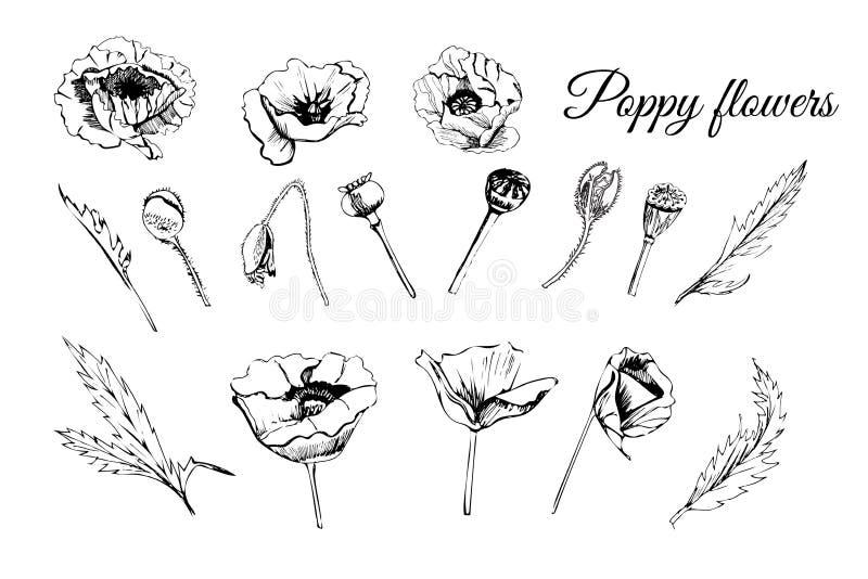 De vastgestelde hand getrokken grafische die schets van papaver bloeit, knoppen en bladeren op witte achtergrond worden geïsoleer stock illustratie
