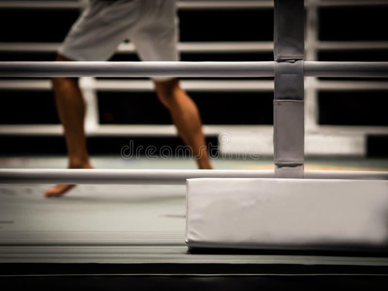 De vechter in de ring stock foto's