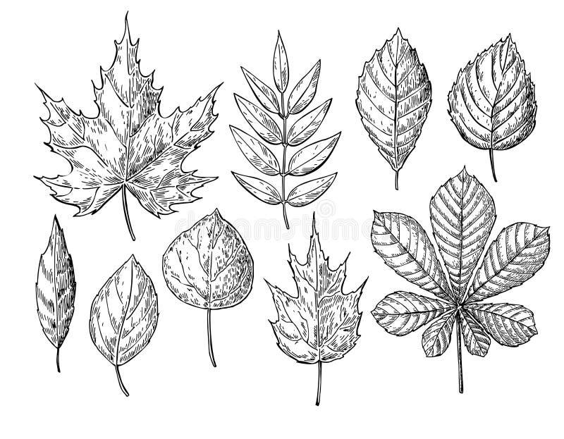 De vector geplaatste bladeren van de de herfsttekening voorwerpen Hand getrokken D vector illustratie