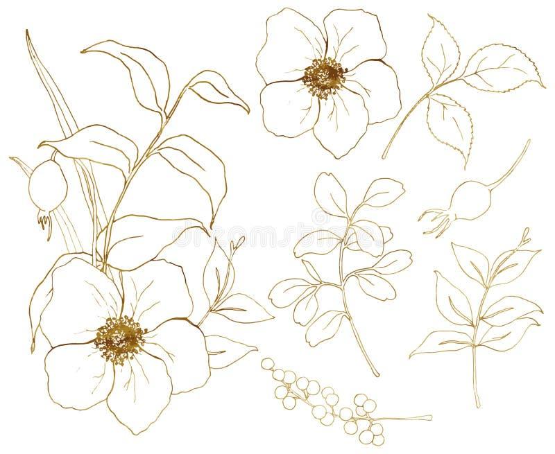De vector gouden reeks van de schetsanemoon De hand schilderde bloemen, eucalyptusbladeren, bessen en tak op wit worden geïsoleer stock illustratie