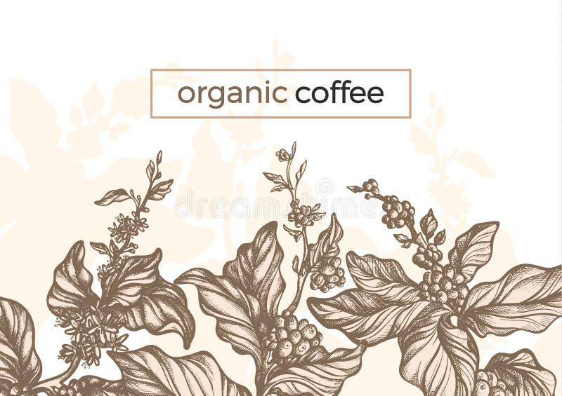 De vector grafische tak van de koffieboom, blad, boon wijnoogst stock illustratie