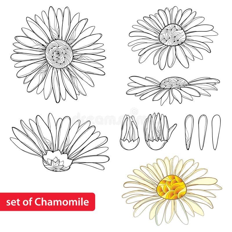 De vector met overzichtskamille wordt bloeit, knop en bloemblaadje op witte achtergrond wordt geïsoleerd geplaatst die Overladen  vector illustratie