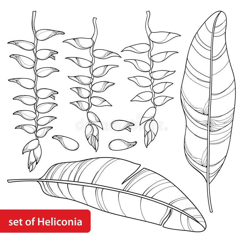 De vector met rostrata of de zeekreeft van overzichtsheliconia wordt krabt bloembos en blad in zwarte op witte achtergrond wordt  stock illustratie