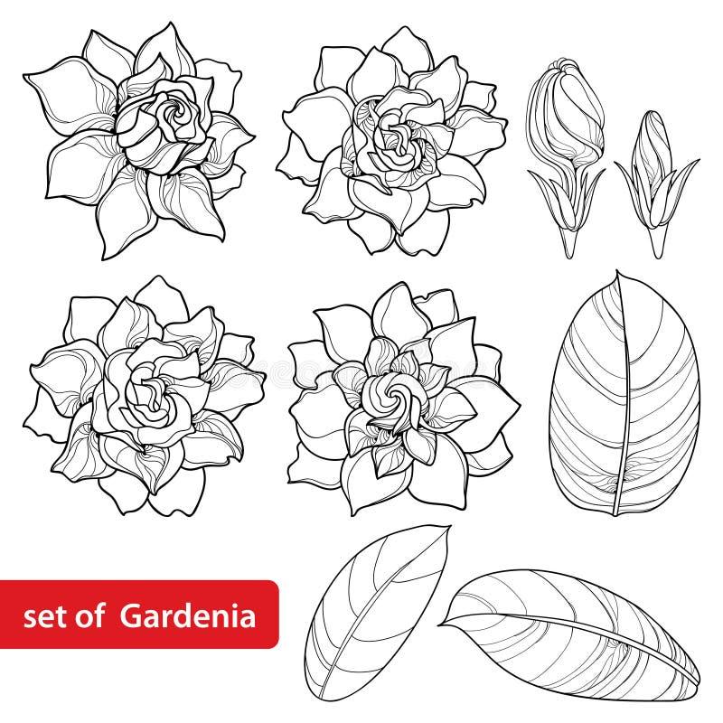 De vector plaatste met de bloem van overzichtsgardenia, overladen die knop en bladeren in zwarte op witte achtergrond wordt geïso vector illustratie