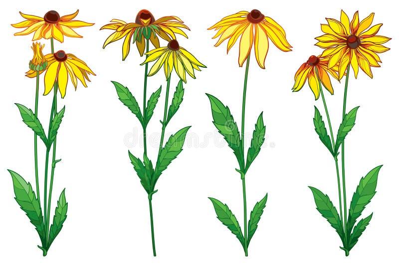 De vector plaatste met hirta van overzichtsrudbeckia of zwart-eyed de bloembos van Susan, overladen groen blad en knop in geel ge stock illustratie