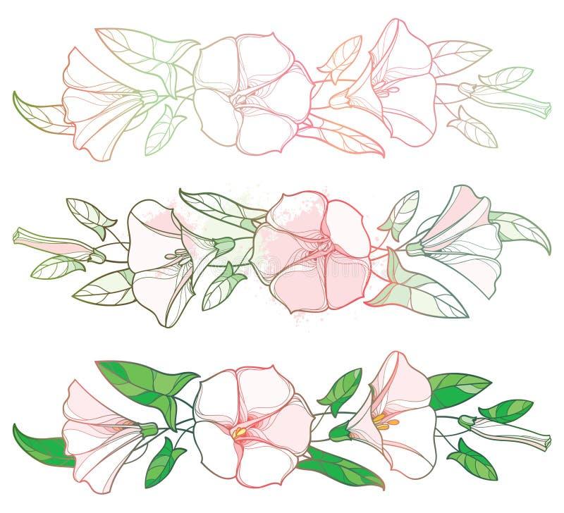 De vector plaatste met overzichtswinde of de slinger van de Windebloem, klok, blad en knop in pastelkleurroze en groen geïsoleerd stock illustratie