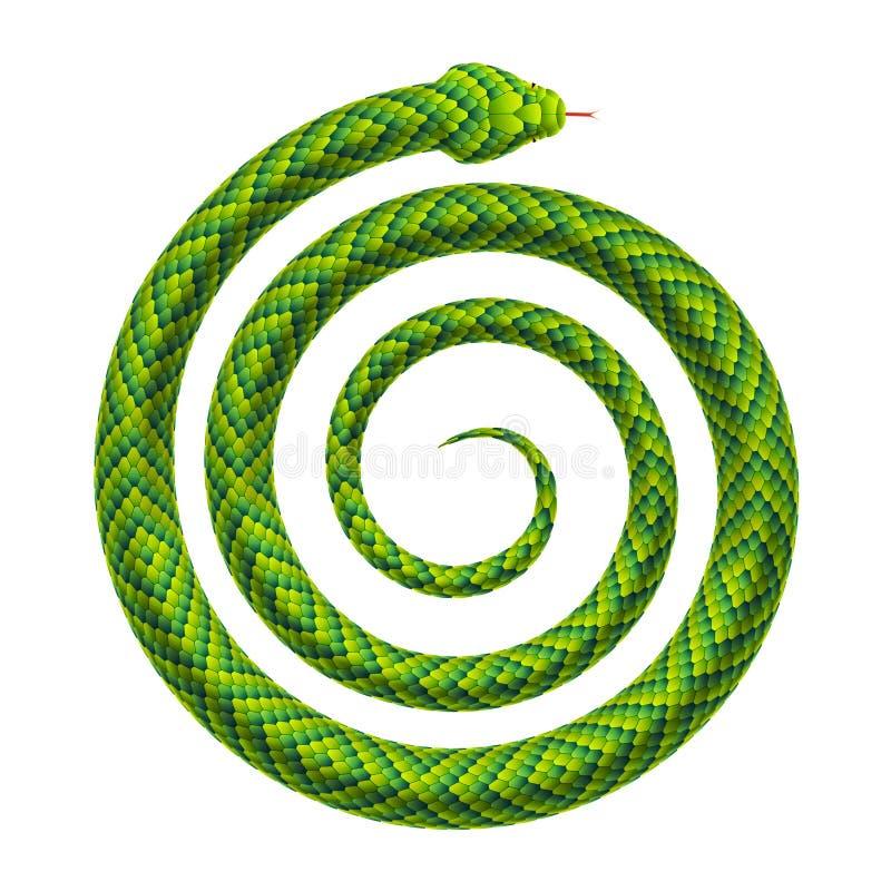 De vector realistische illustratie van een slang rolde omhoog in een spiraalvormige vorm vector illustratie