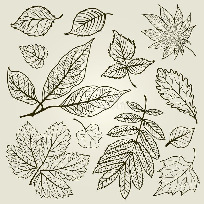 De vector reeks van de herfst doorbladert illustratie vector illustratie