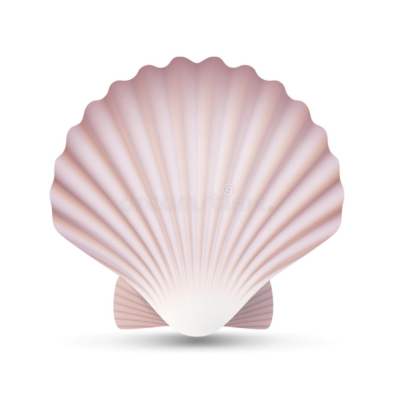 De Vector van de kammosselzeeschelp Oceaanweekdieroverzees Shell Close Up Geïsoleerde Illustratie royalty-vrije illustratie