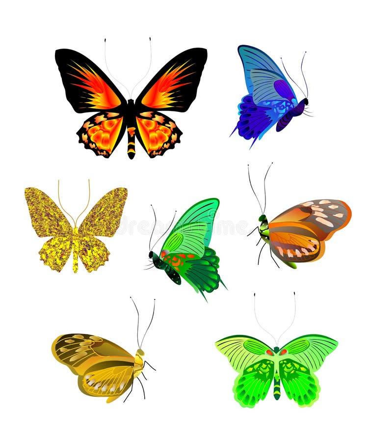 De Vector van de vlinder stock illustratie