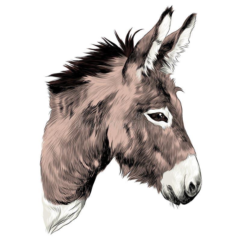 De vector van de ezelsschets vector illustratie