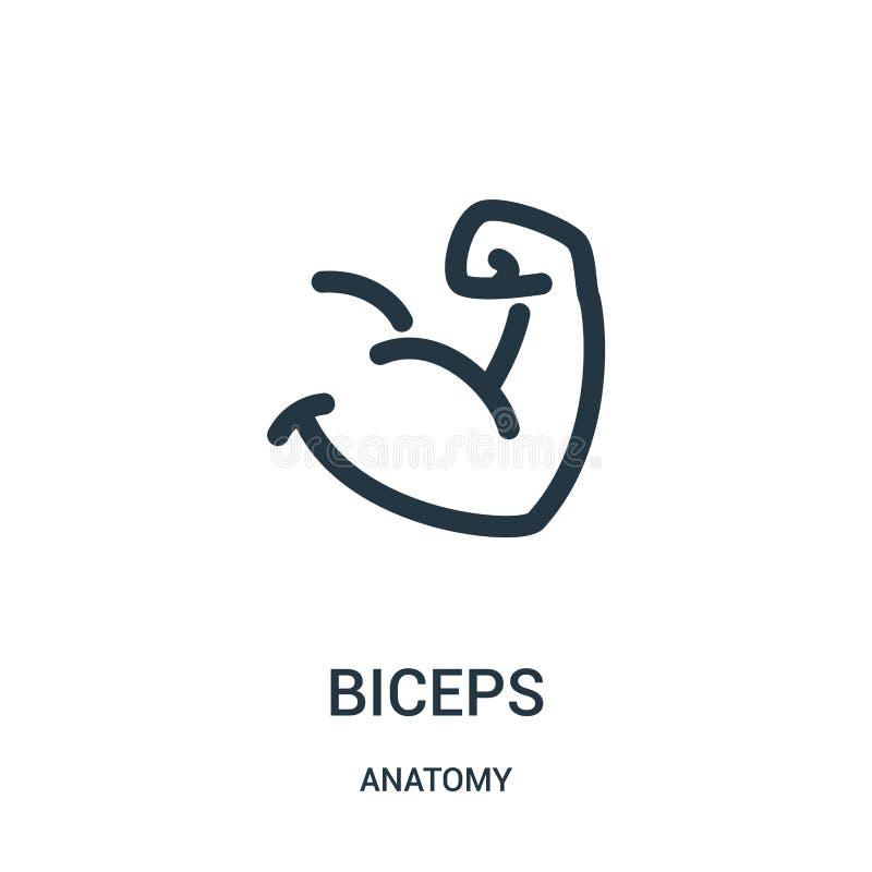de vector van het bicepsenpictogram van anatomieinzameling De dunne van het het overzichtspictogram van lijnbicepsen vectorillust stock illustratie