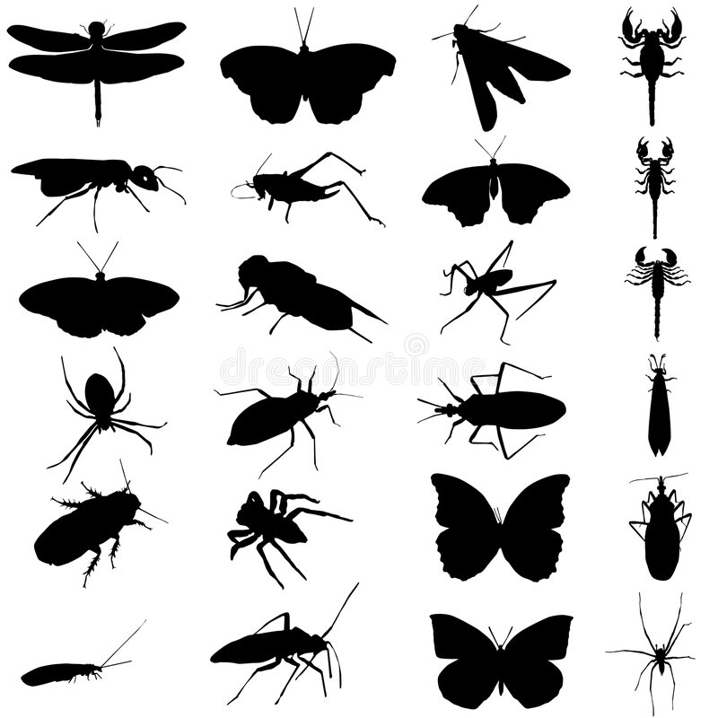 De vector van het insect stock illustratie