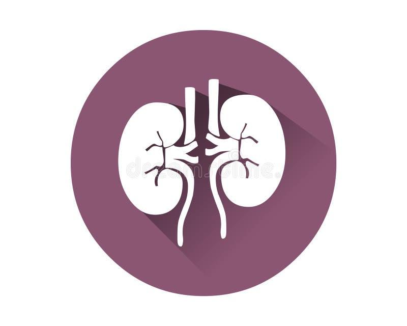 De vector van het nierenpictogram Menselijk intern orgaan royalty-vrije illustratie