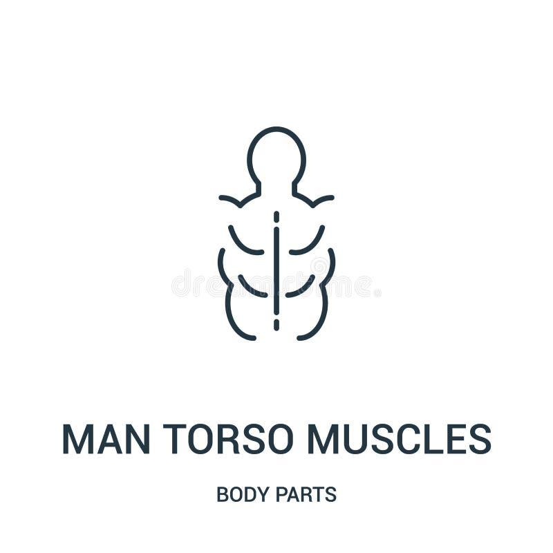 de vector van het de spierenpictogram van het mensentorso van lichaamsdeleninzameling De dunne van het torsospieren van de lijnme stock illustratie