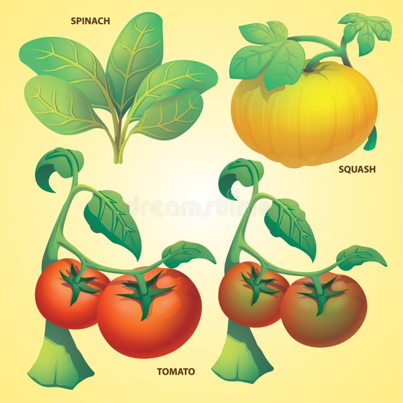 De vector van de de pompoentomaat van de groentenspinazie stock illustratie