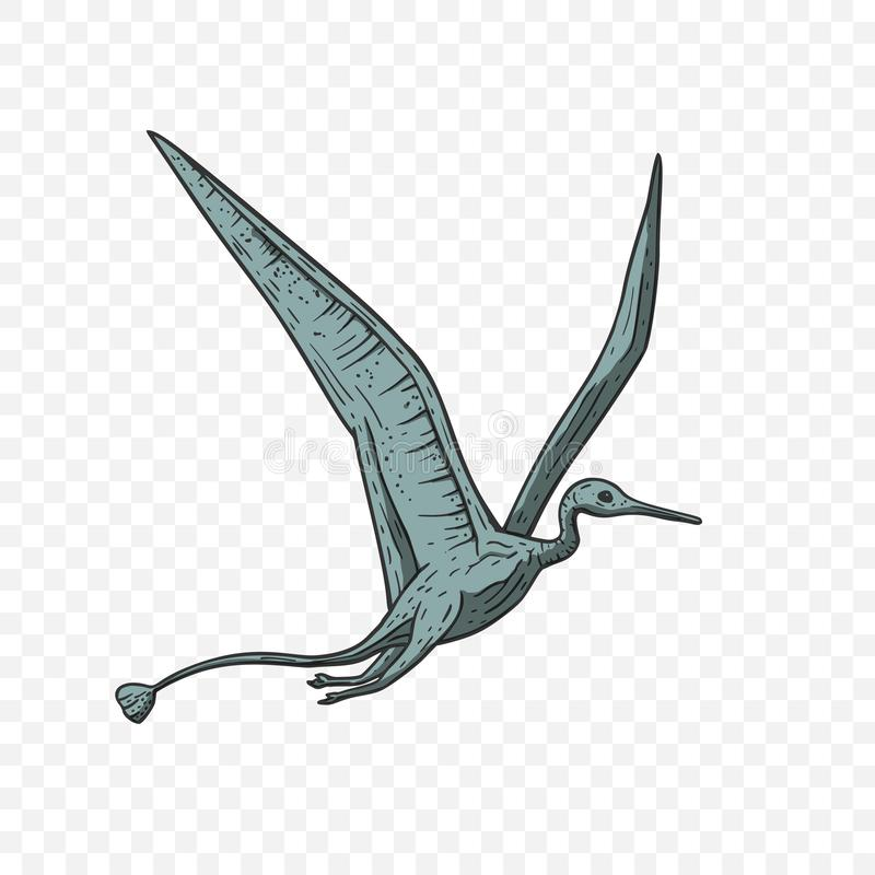 De vector van de Pteranodondinosaurus vector illustratie