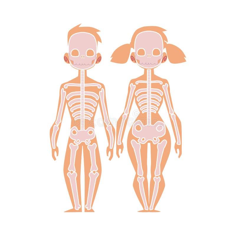 De vector vlakke anatomie van het structuur menselijke lichaam, skelet stock illustratie