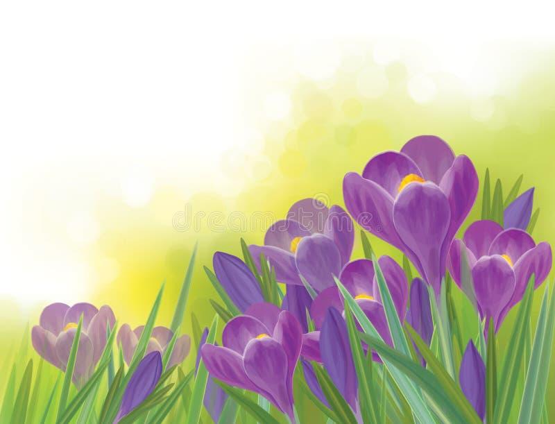 De vectorbloemen van de de lentekrokus op de lenteachtergrond royalty-vrije illustratie