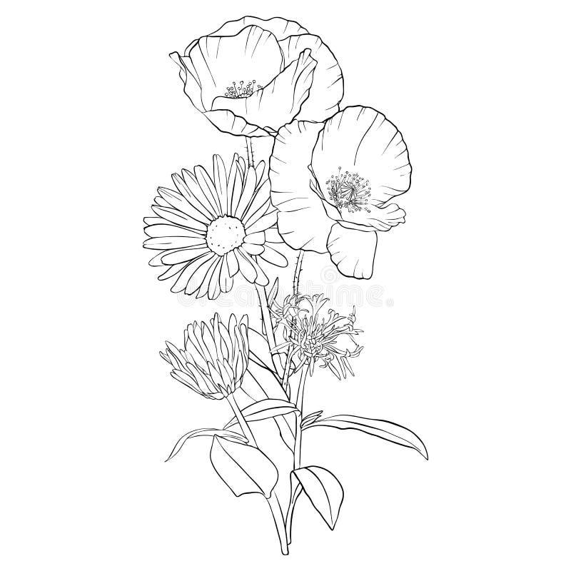 De vectorbloemen van de tekeningspapaver stock illustratie