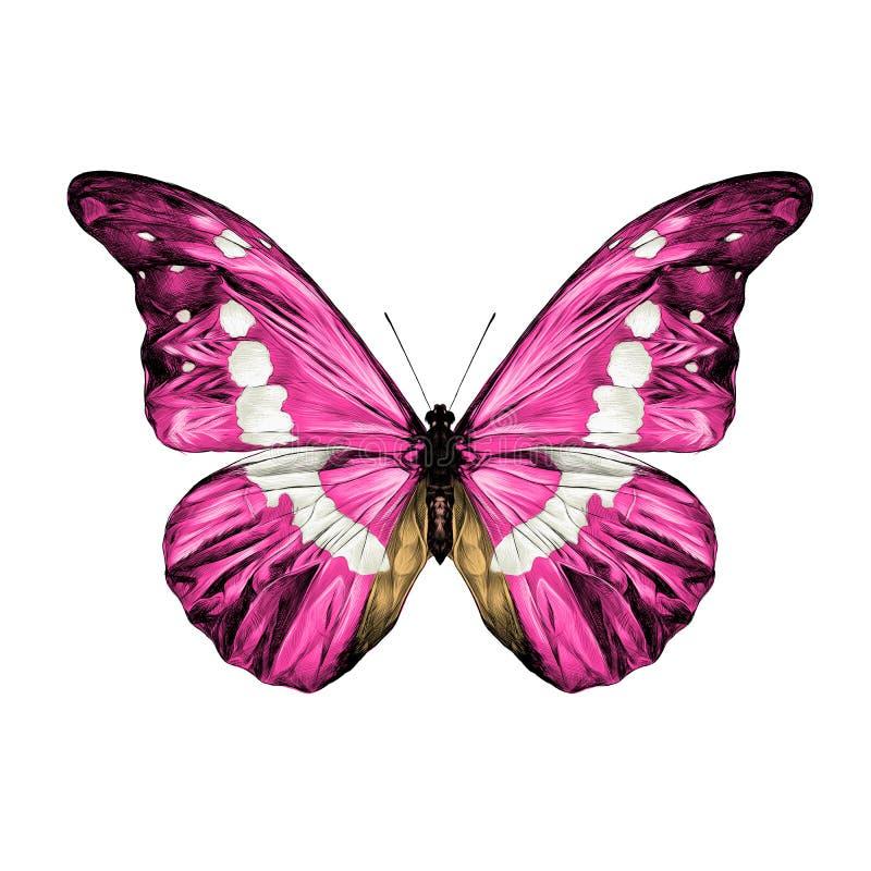 De vectorgrafiek van de vlinderschets royalty-vrije illustratie