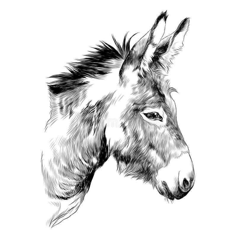 De vectorgrafiek van de ezelsschets vector illustratie