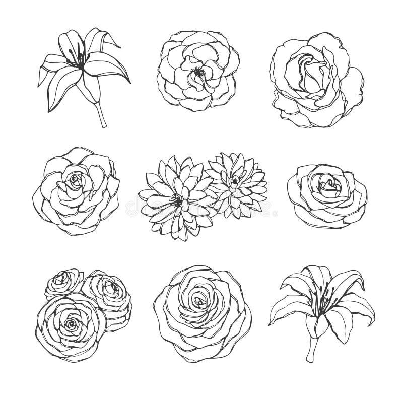 De vectorhand getrokken die reeks van roze, lelie, pioen en chrysant bloeit contouren op de witte achtergrond worden geïsoleerd w stock illustratie