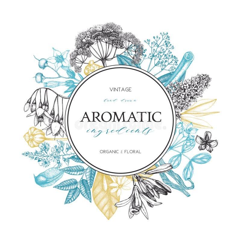 De vectorhand getrokken Parfumerie en illustratie van schoonheidsmiddeleningrediënten Aromatische en geneeskrachtige installatieo vector illustratie