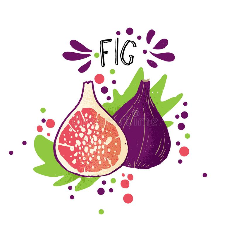 De vectorhand trekt gekleurde fig.illustratie Purpere, blauwe perzik met pulp en fruitbeenderen en groene bladeren Verse tropisch vector illustratie