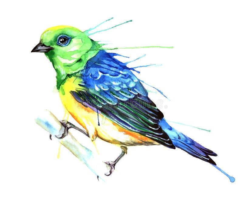 De vectorillustratie van de waterverfstijl van vogel stock foto
