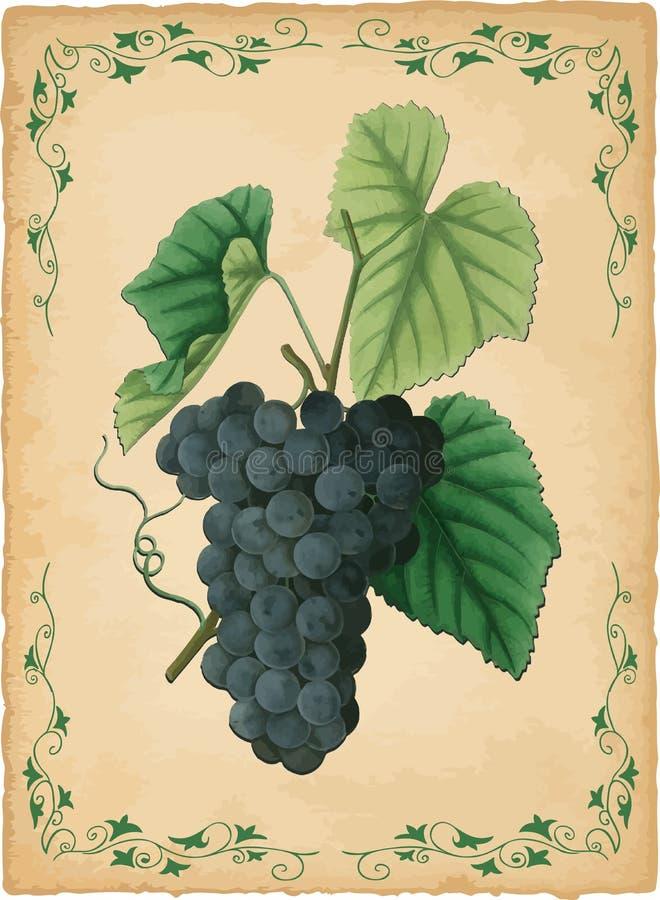 De vectorillustratie van druiven stock illustratie