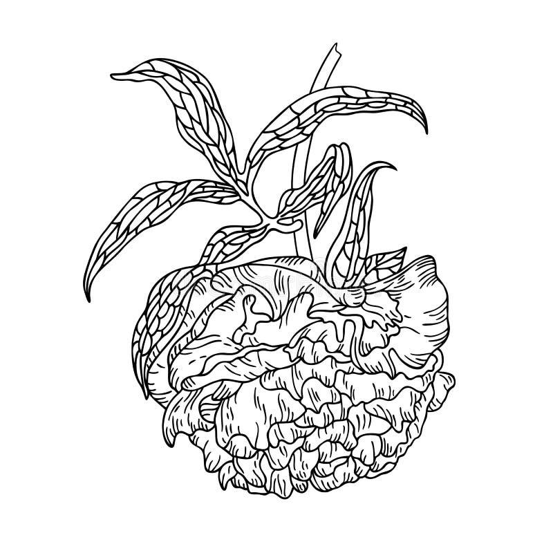 De vectorillustratie van de lijnkunst van een pioenbloem vector illustratie