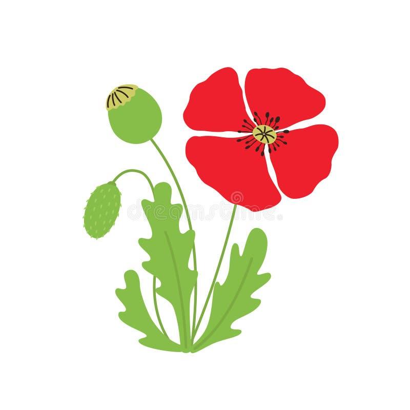 De vectorillustratie van de papaverbloem op wit geïsoleerde achtergrond royalty-vrije illustratie