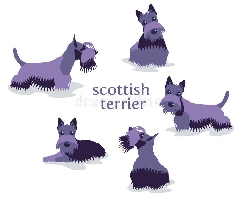 Download De Vectorillustratie Van Schots Terrier In Verschillend Stelt Stock Illustratie - Illustratie bestaande uit leuk, dier: 114225730