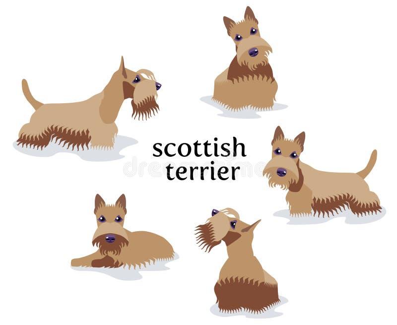 Download De Vectorillustratie Van Schots Terrier In Verschillend Stelt Stock Illustratie - Illustratie bestaande uit binnenlands, hond: 114225758