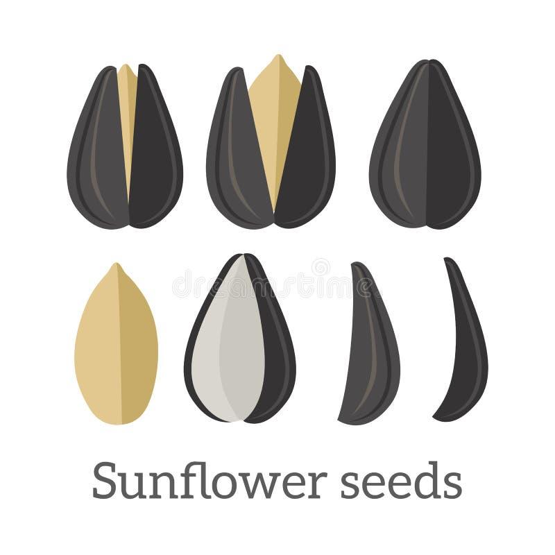 De Vectorillustratie van zonnebloemzaden in Vlak Ontwerp vector illustratie