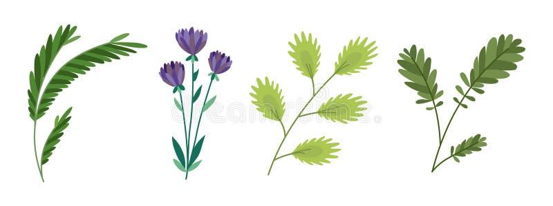 De vectorontwerperelementen plaatsen inzameling van groene bosvaren, tropisch groen natuurlijk de kunstgebladerte van het eucalyp vector illustratie