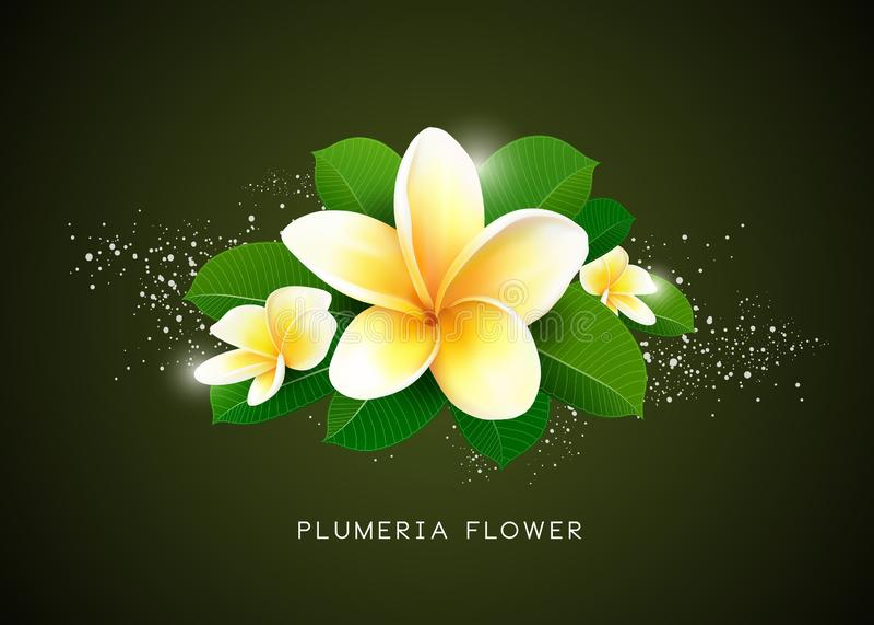 De vectorplumeria-bloem en achtergrond van het bladontwerp stock illustratie