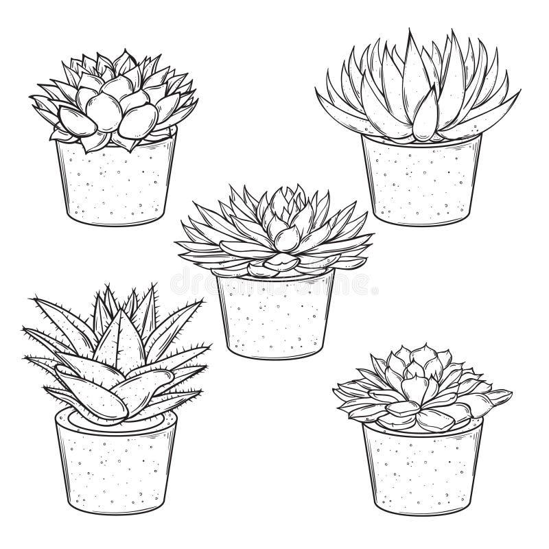 De vectorreeks schetsen huisvest installaties succulents in potten op een witte achtergrond vector illustratie