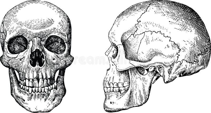 De vectorschedels van Grunge royalty-vrije illustratie