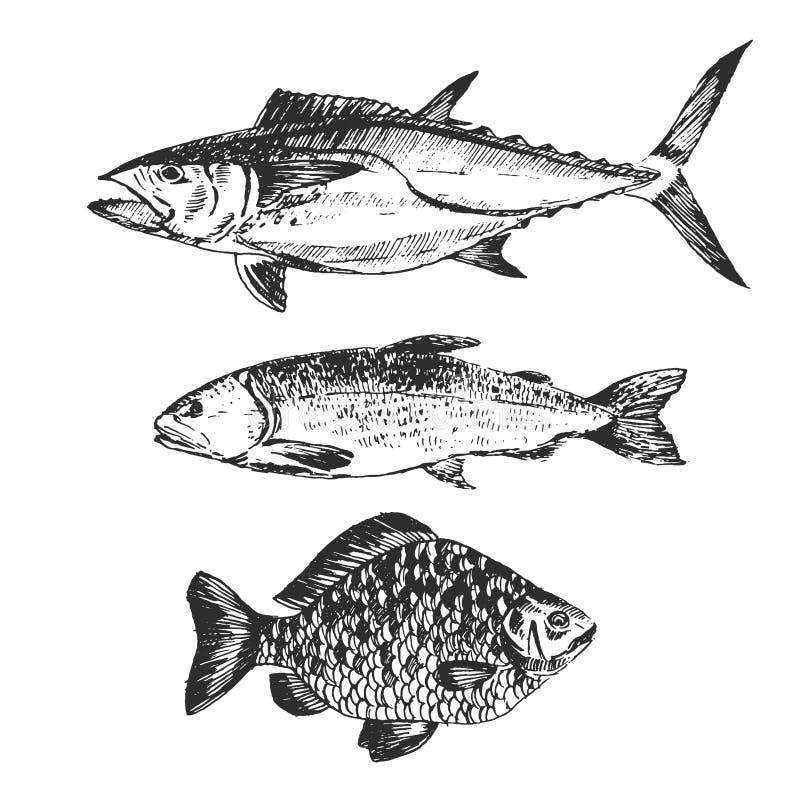 De vectortekening van de vissenschets - zalm, forel, karper, tonijn hand getrokken overzees voedselillustratie royalty-vrije illustratie