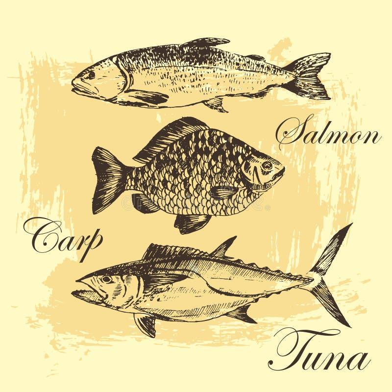 De vectortekening van de vissenschets - zalm, forel, karper, tonijn hand getrokken overzees voedselillustratie stock illustratie