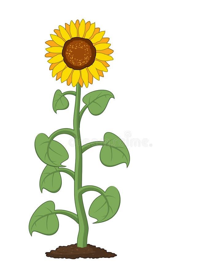 De vectortuinzonnebloem groeit in grond vector illustratie