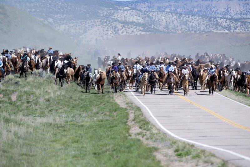 De veedrijfsters van wranglerscowboys van de sombreroboerderij leiden honderden paarden op jaarlijkse Grote Amerikaanse Paardaand stock foto