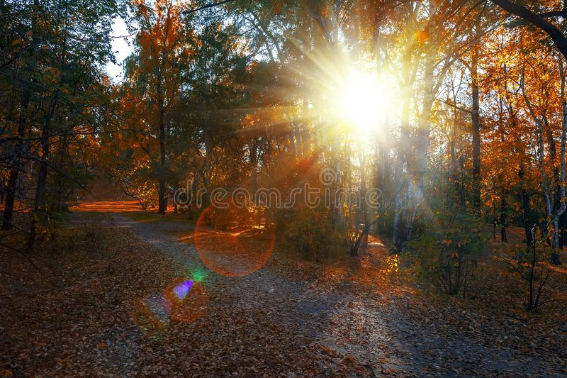 De veelkleurige gouden herfst De natuurlijke zonstralen in lichte ochtendmist maken hun manier door takken en gevoerde bomen in e royalty-vrije stock afbeeldingen