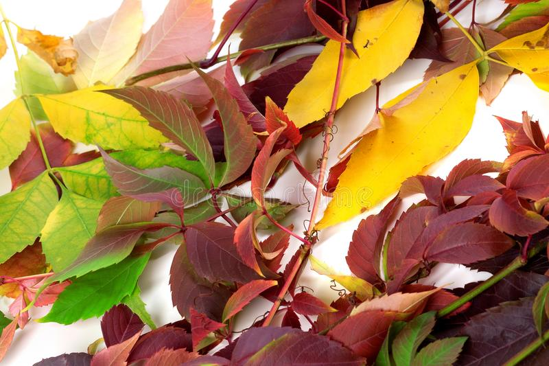 De veelkleurige herfst doorbladert stock foto