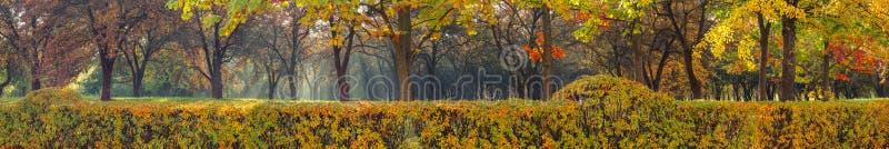 de veelkleurige herfst mooi panorama van het stadspark achter een levendige omheining met lichte mist en natuurlijke zonstralen stock foto's
