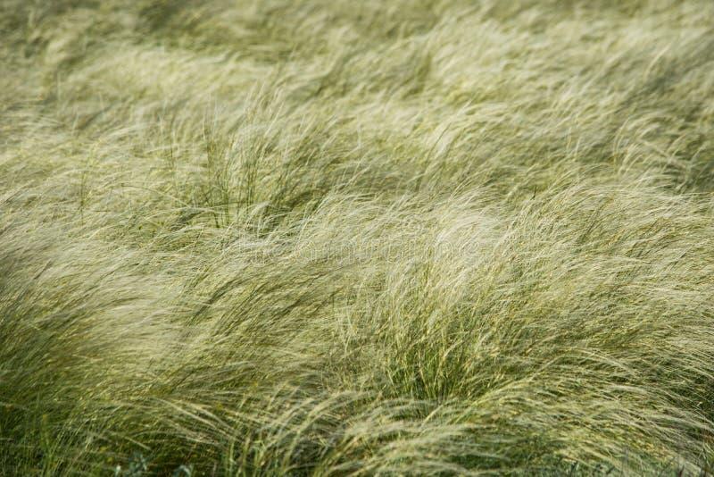 De veer groeide in de steppe Geweven Achtergrond stock afbeelding