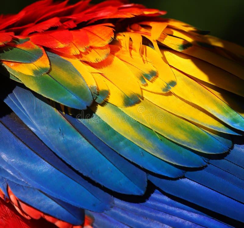 De veer van de papegaai stock afbeeldingen