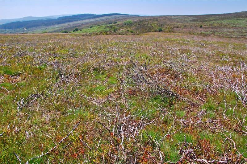 De vegetatie op Dartmoor legt vast stock afbeelding